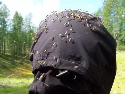 mosquitos y otros insectos en la taiga rusa